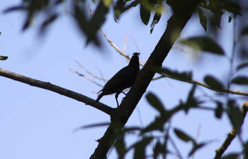 Silhouette of bird №20325