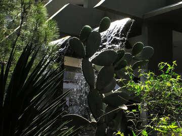 Cactus №20729