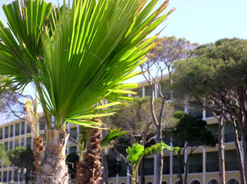 Palm trees on the site №20849