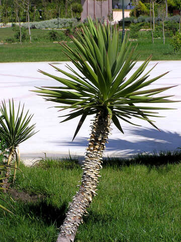 Young palm №20853