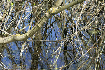 Alto de agua.Árbol en el agua. №20375