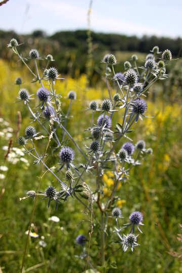 Beautiful weed №20351