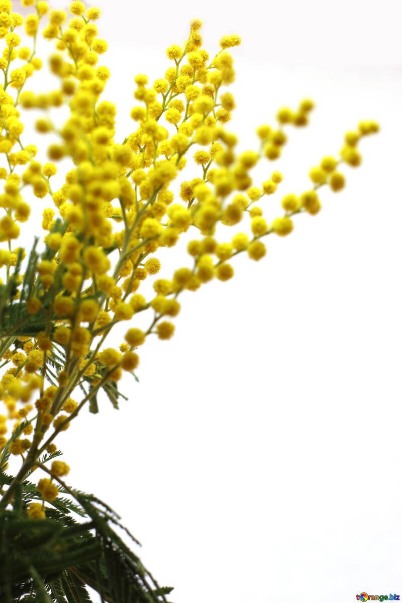 Цветок на восьмое марта №20503