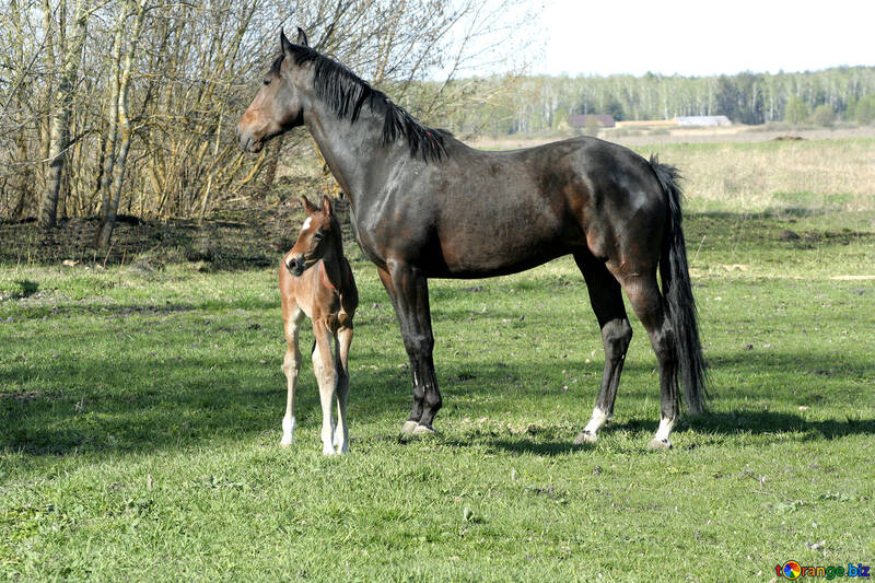 The foal is walking with horse №20426