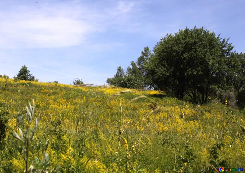 Blooming slope №20279