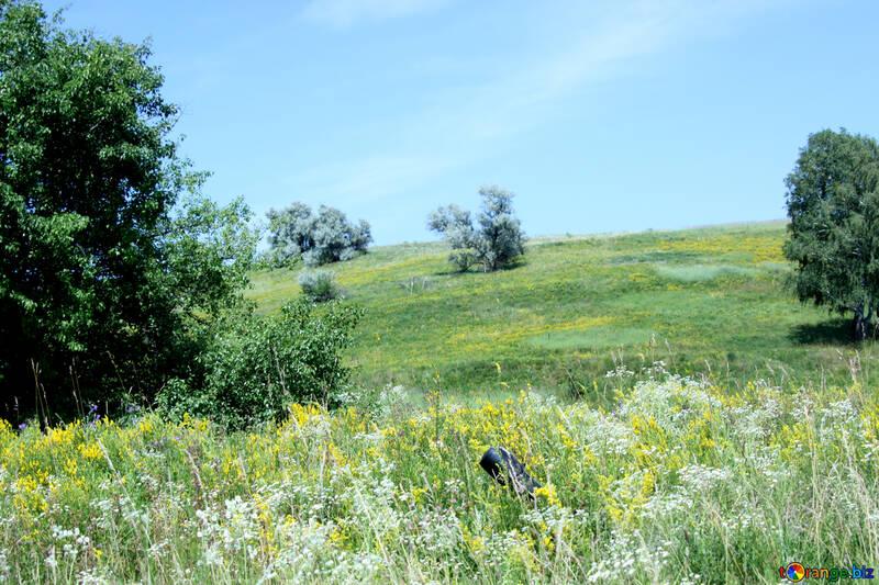 Grazing on the hillside №20229