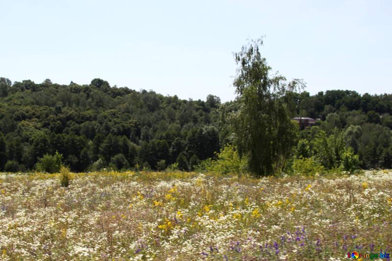 Природа в Украине №20301