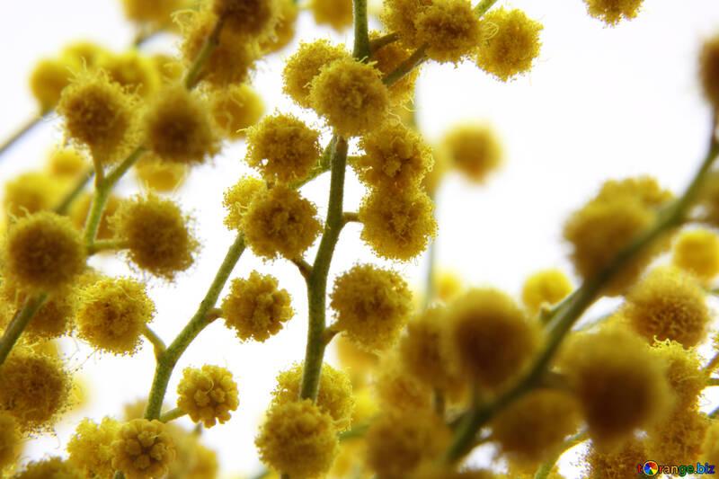 Delicate spring flower №20491