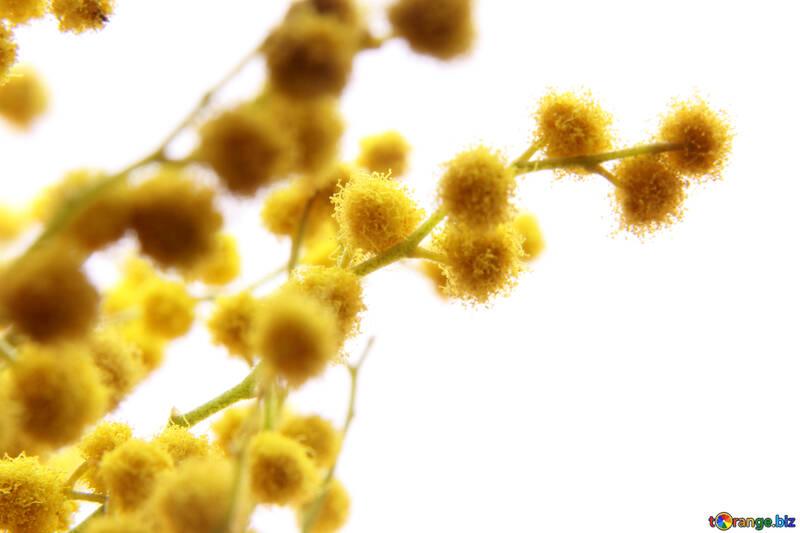 Flor de bolas amarillas №20482