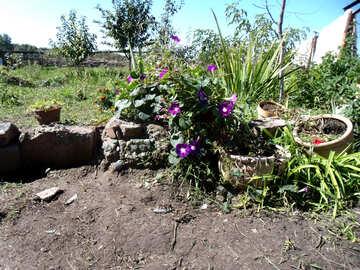 Alpine garden of flower pots №21515
