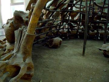 Shelter of primitive people №21490