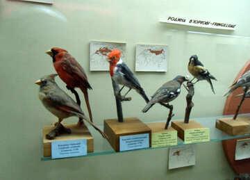 Finch bird effigy №21284