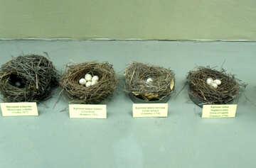 Bird`s nest №21288