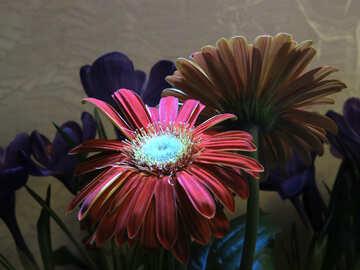 Bouquet con gerbere №21253