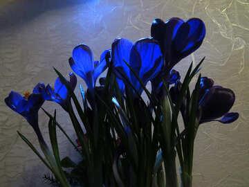 Bouquet di primavera №21258