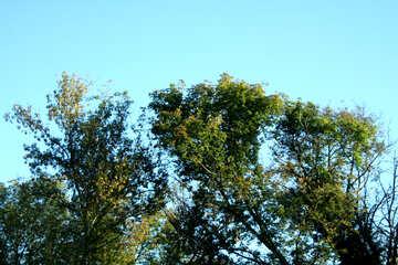 Sky trees №21838