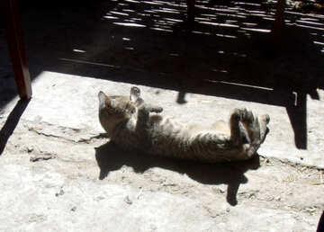 Cat basking in the sun №21507