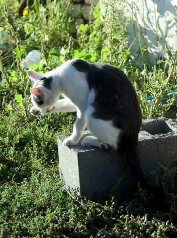 Cat shampoos №21844