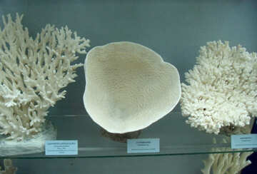 Collection of corals №21401