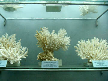 Exhibition of corals №21400