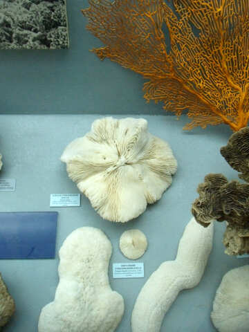 Species of corals №21402