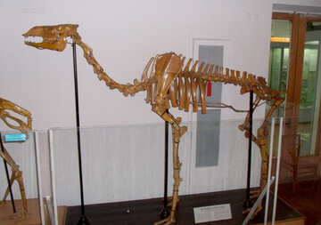The skeleton of camel №21446