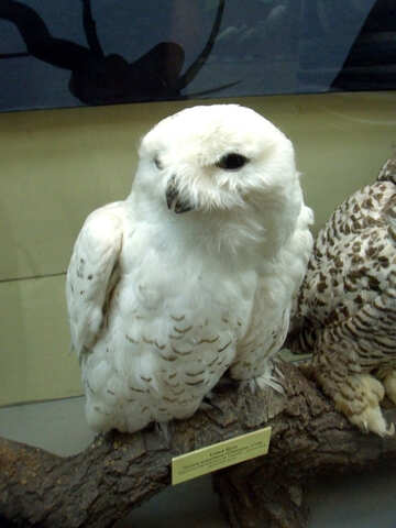Bird stuffed snowy owl №21301