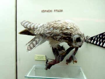 Eared owl bird effigy №21282