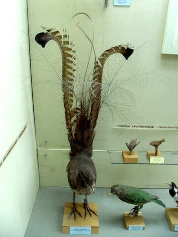 Bird pheasant stuffed №21291