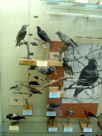 Starling bird effigy №21286