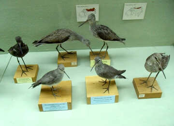 Stuffed birds №21310