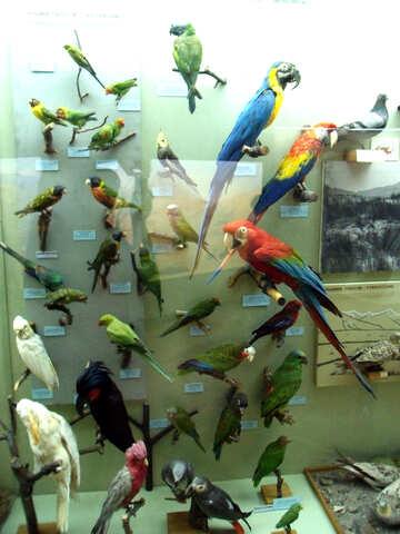 Stuffed birds parrots №21302