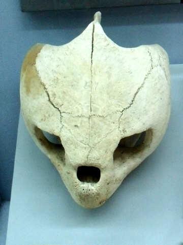 Alien Skull №21444