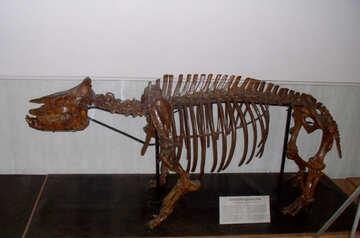 Ancient animal bones №21448