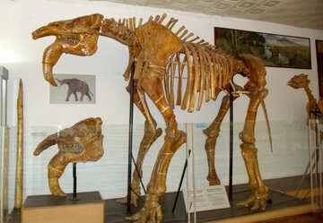 Ancient skeleton №21450