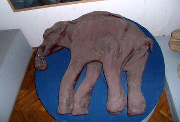 Mammoth №21473