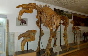 The skeleton of an extinct animal №21451