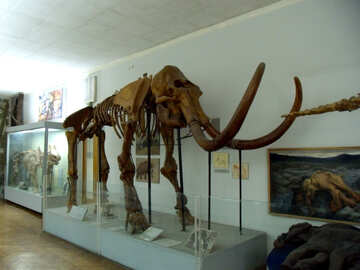 The skeleton of mammoth №21476