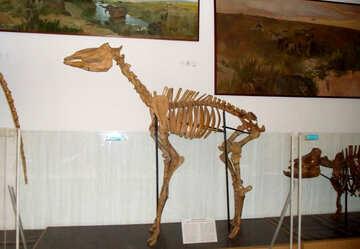 The skeleton of prehistoric animal №21449