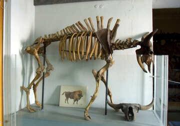 Skeleton of prehistoric animal №21483