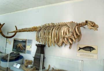 Skeleton seal №21482