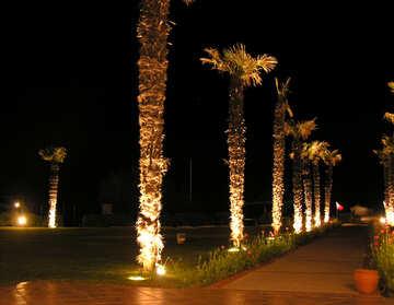 Lights in the garden №21109