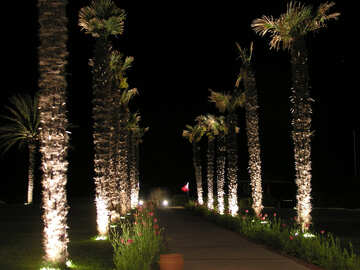 Palm trees at night №21110