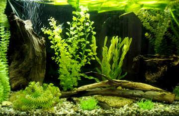Aquarium Design №21441