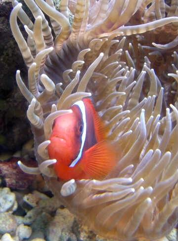 Nemo №21423