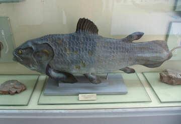 Ancient Fish №21469