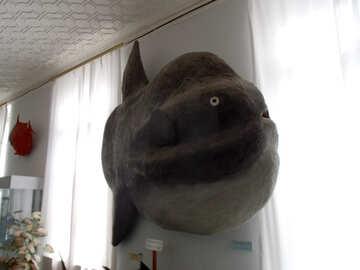Fish stuffed moon №21337