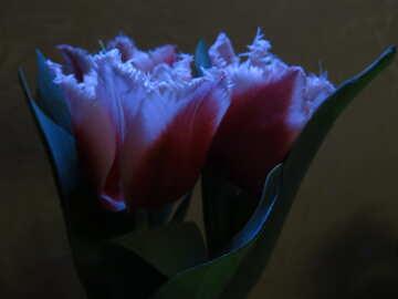 Twilight Flowers №21246