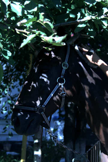 Horse in the shade of the trees №21865