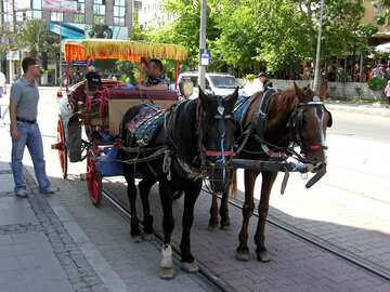 Horse carriage rides №21012